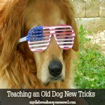 Teaching and Old Dog New Tricks