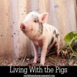 Living With the PIgs